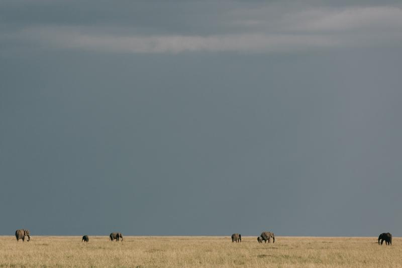 025-masai-mara-wedding-by-jonas-peterson-(pp_w800_h533)